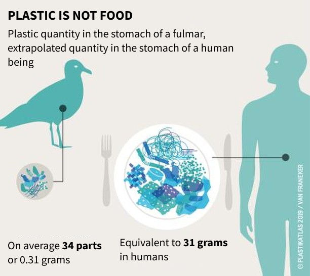Comparison of the plastic intake of a bird and a human being